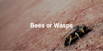 Pest control Abu Dhabi for bees and wasps