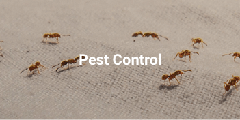 Pest control services in Abu Dhabi
